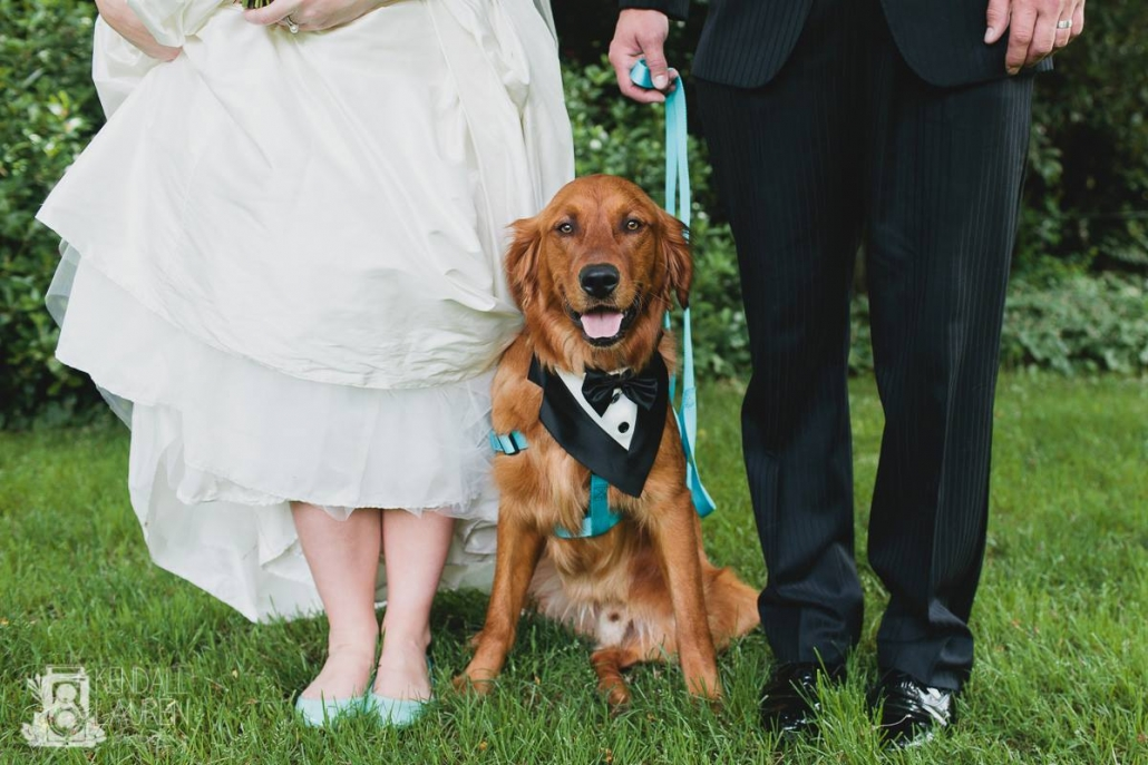 Can I have my dog at my wedding, Dogs in weddings, elopement with dog, Seattle Wedding Officiants loves dogs